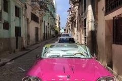Dodge rosa