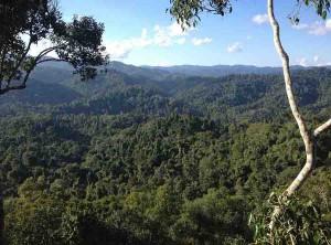 Vista sulla foresta
