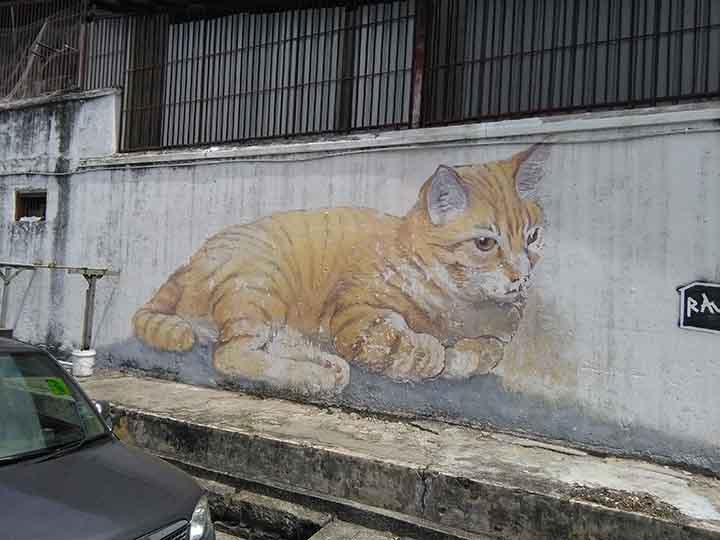 Gatto gigante